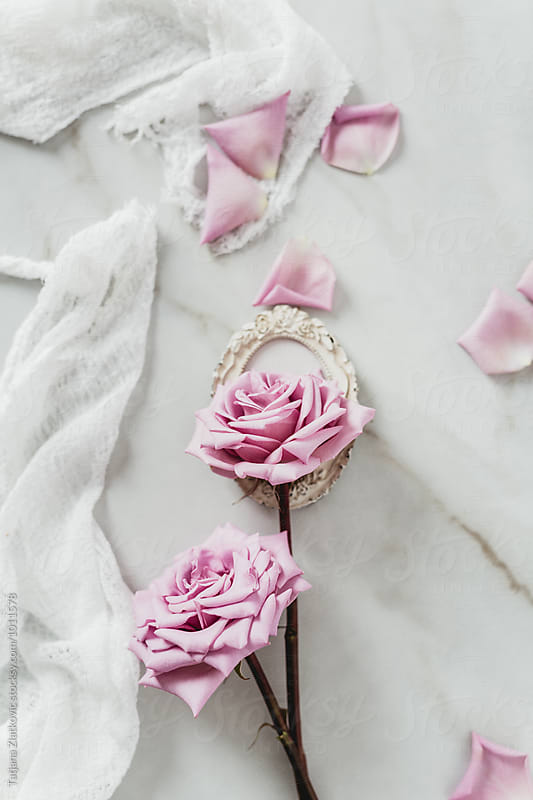 Pink roses by Tatjana Ristanic for Stocksy United
