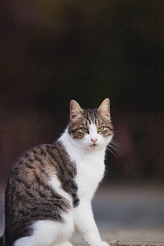 Beautiful cat outside by Luca Pierro for Stocksy United