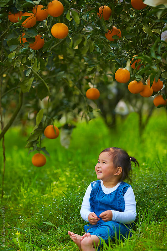 lovely little asian girl sitting under the orange tree  by cuiyan Liu for Stocksy United