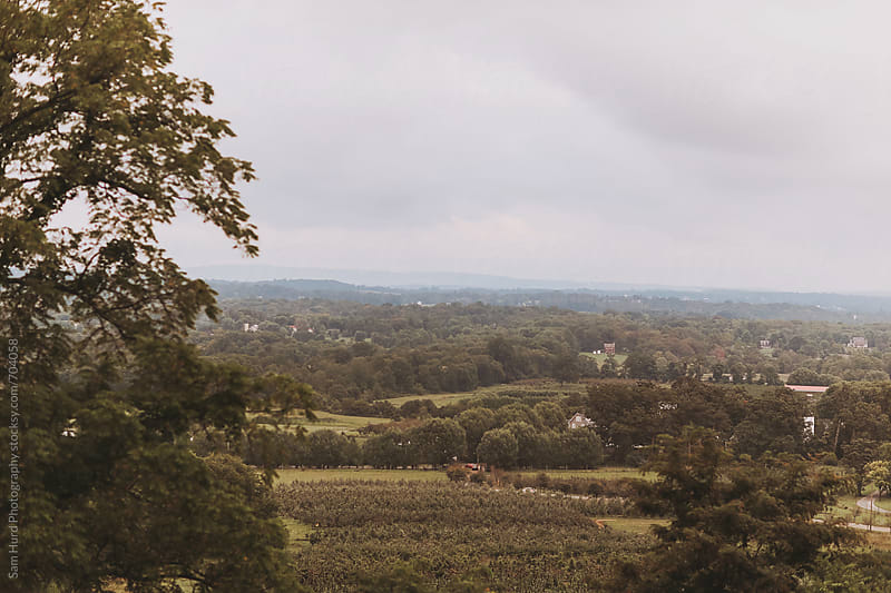 overcast day at vineyard by Sam Hurd Photography for Stocksy United
