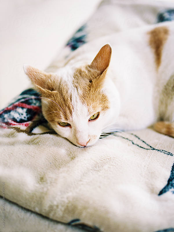 Close up of cat laying on woolen blanket in sunny room by Laura Stolfi for Stocksy United