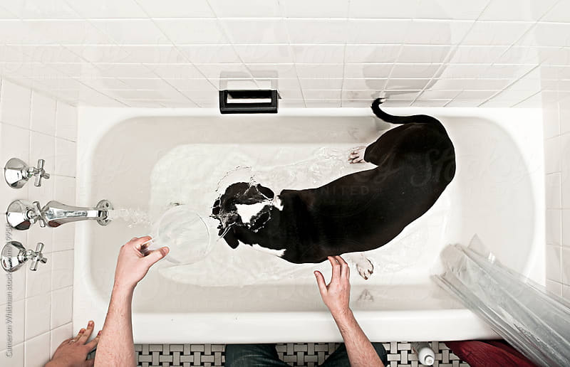 Washing The Dog by Cameron Whitman for Stocksy United