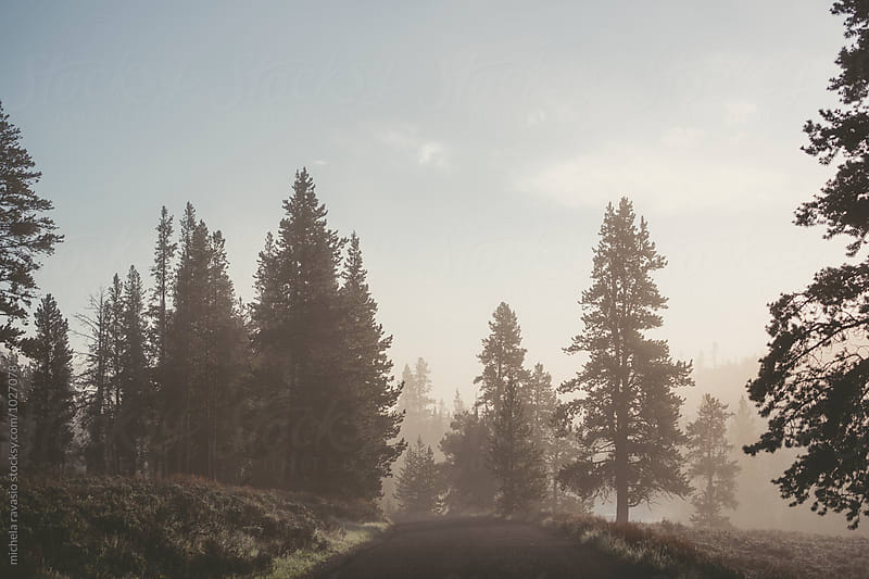 Road in Yellowstone National Park at sunrise by michela ravasio for Stocksy United
