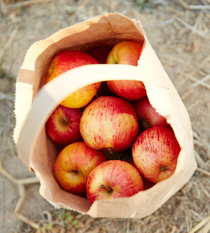 Bag of organic apples in paper bag at farm by Trinette Reed for Stocksy United