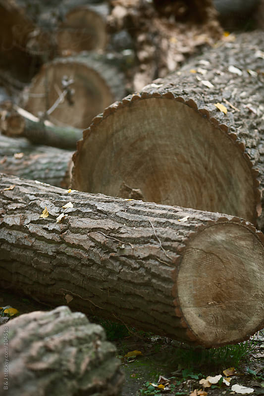 pile of logs by B & J for Stocksy United