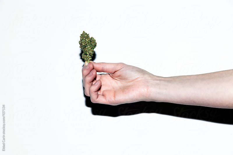 Handheld Cannabis Bud Snapshot by Eldad Carin for Stocksy United