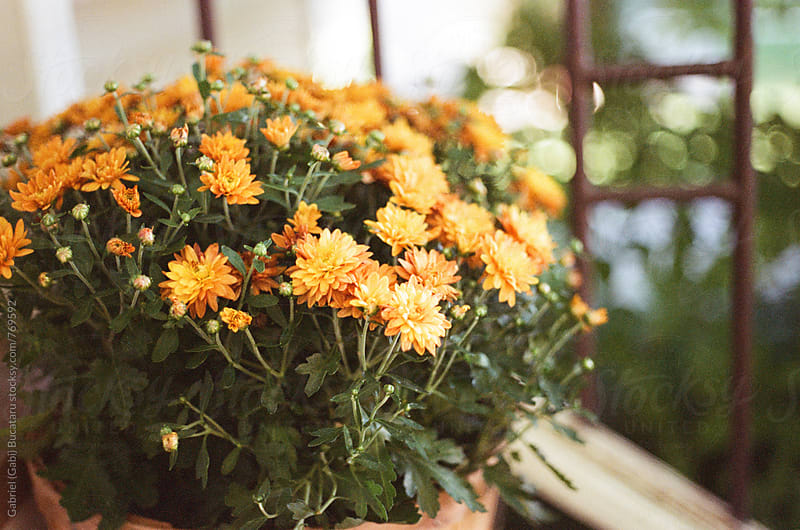Mums on a porch by Gabriel (Gabi) Bucataru for Stocksy United