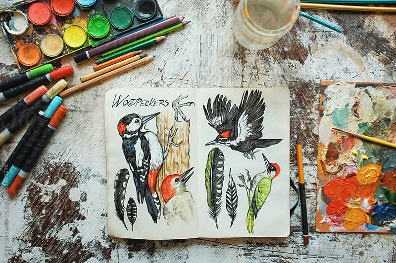 woodpeckers by Paul Schlemmer for Stocksy United