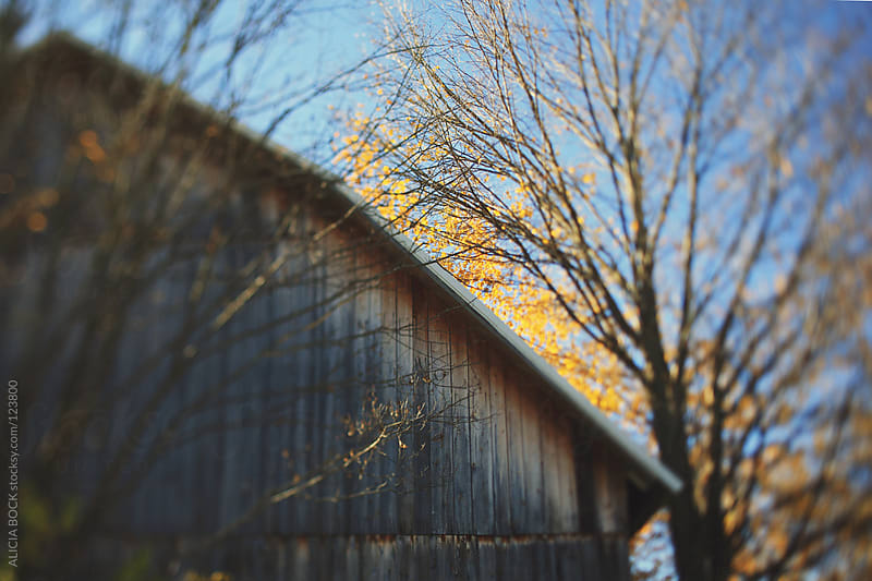 Autumn Barn by ALICIA BOCK for Stocksy United