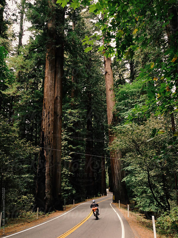Motorcycle Driving Through Redwoods by Kevin Russ for Stocksy United