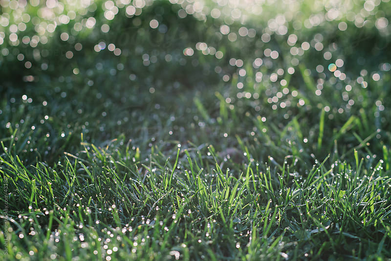 Grass with dew and bokeh. by Sarah Lalone for Stocksy United