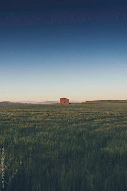 a house in the middle of corn field by Javier Pardina for Stocksy United