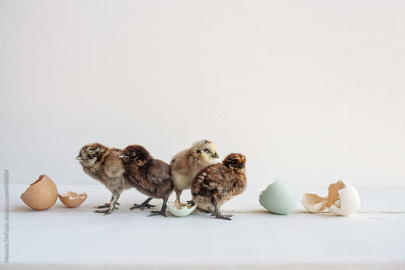 chicks by Melanie DeFazio for Stocksy United
