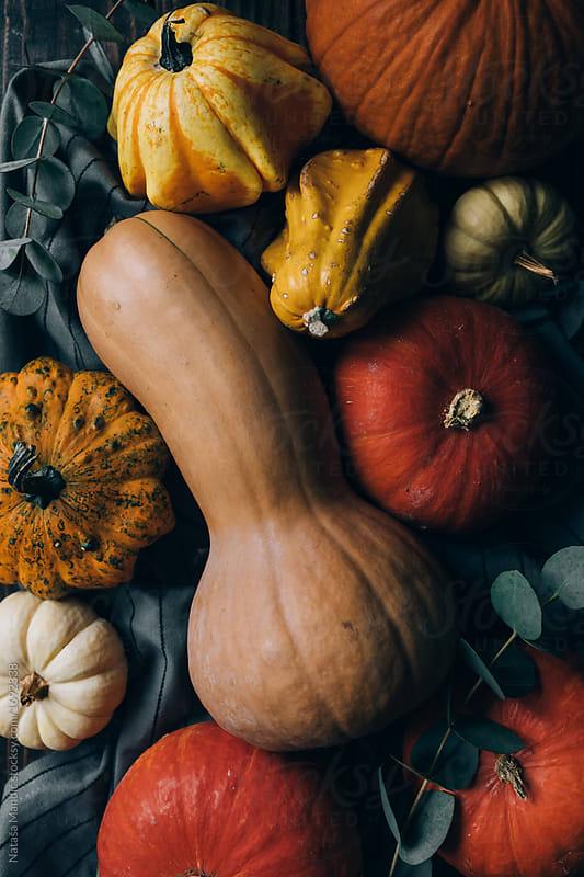 Different kind of pumpkins