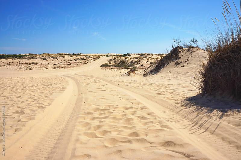 Dunes in Doñana, Huelva by ACALU Studio for Stocksy United