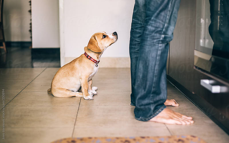 Puppy waiting for his food by Jovo Jovanovic for Stocksy United