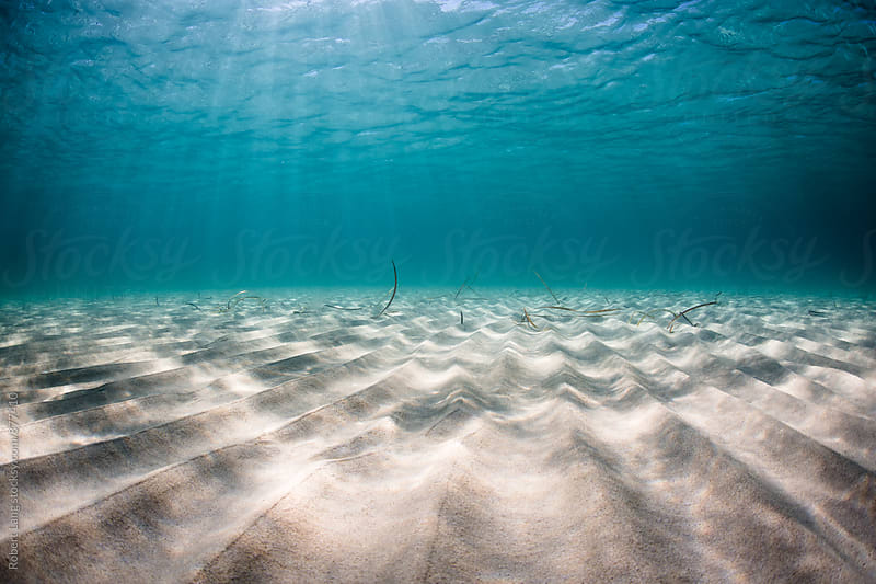 Underwater of a beach landscape by Robert Lang for Stocksy United