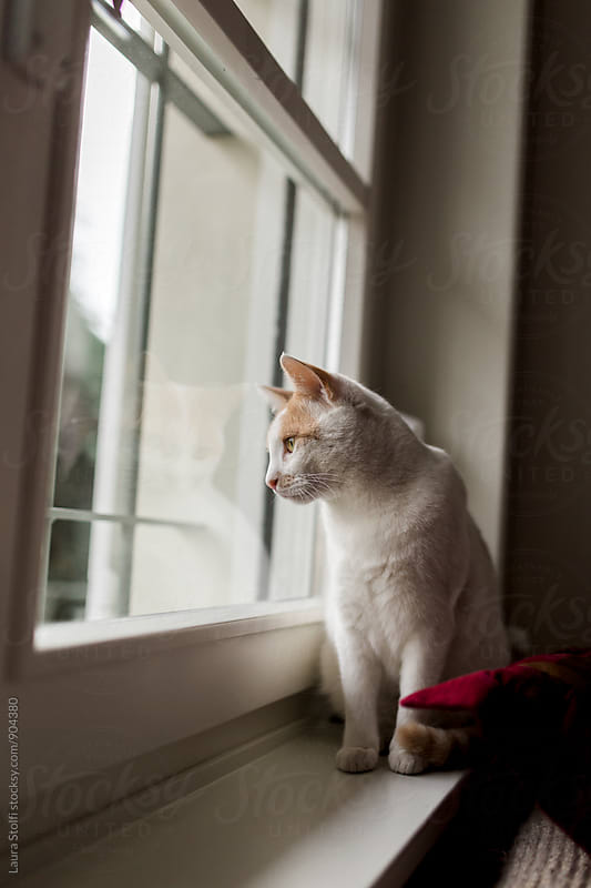 Pensive cat looks out of the window in dark cloudy day by Laura Stolfi for Stocksy United