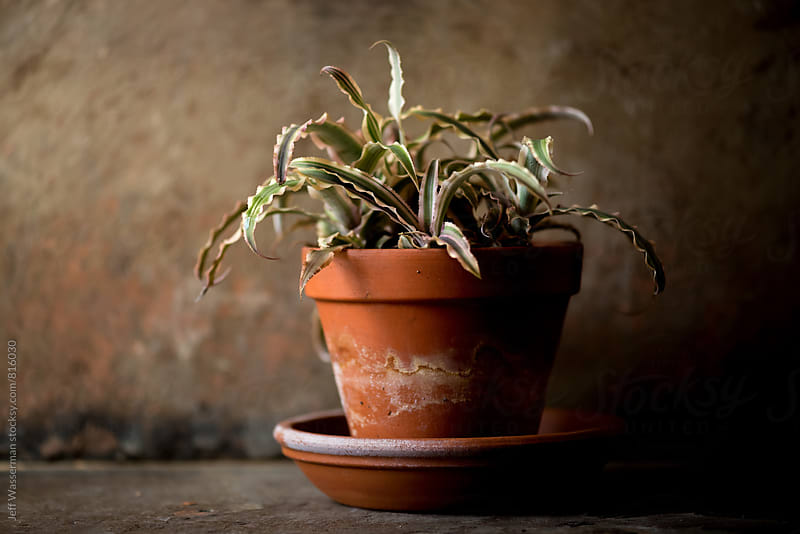 Potted Cactus Plant in Clay Pot by Jeff Wasserman for Stocksy United