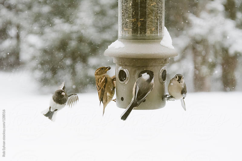 Winter Bird Feeder by Rob Sylvan for Stocksy United