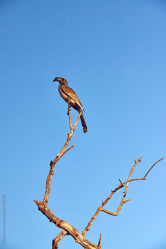 wild bird of prey on leafless branch