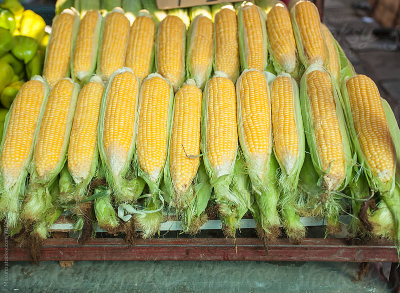 Fresh organic corn on a market. by Mosuno for Stocksy United