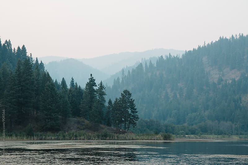 Trees across a lake on a smoky day by Justin Mullet for Stocksy United