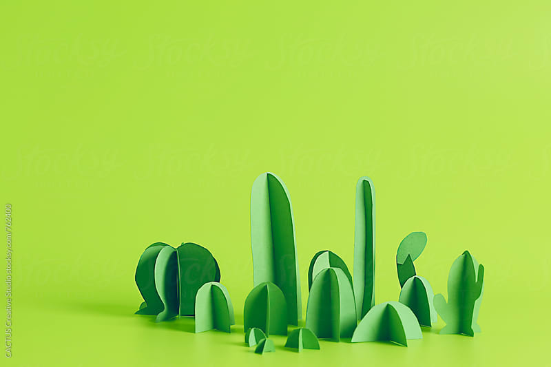 Cactus garden by Blai Baules for Stocksy United