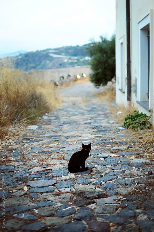 Black Cat by Eleonora Grasso for Stocksy United