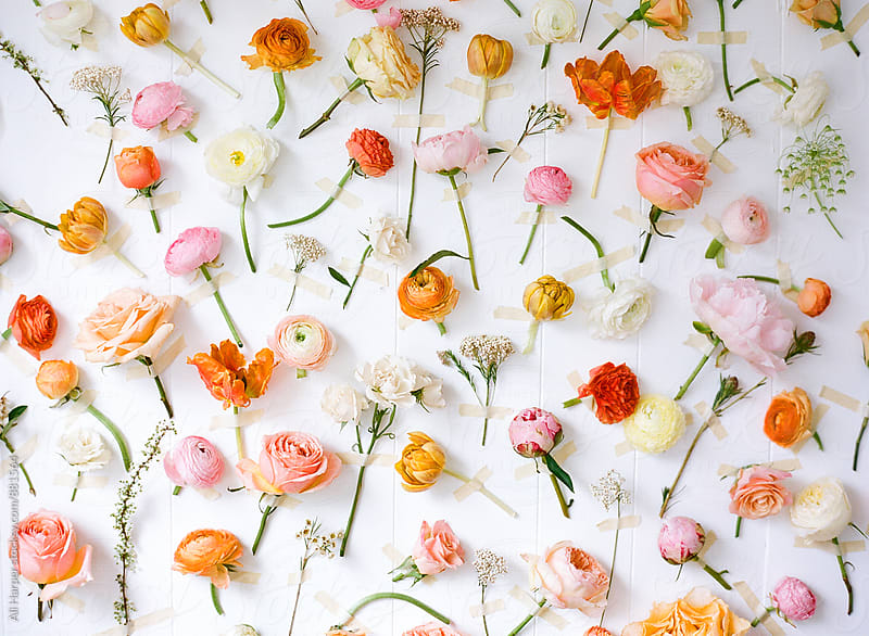 Flower backdrop by Ali Harper for Stocksy United