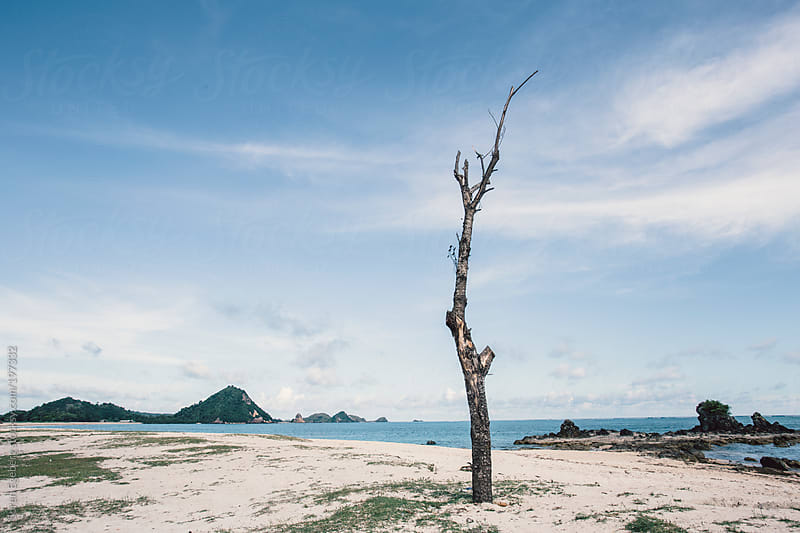 Ocean landscape and beach with isolated dead tree. by Soren Egeberg for Stocksy United