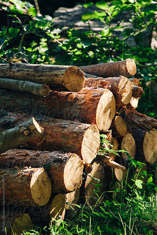 Stack Of Logs In Forest by Borislav Zhuykov for Stocksy United