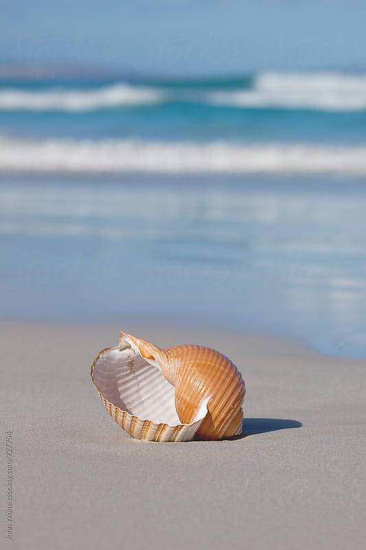 A shell on a beach. by John White for Stocksy United