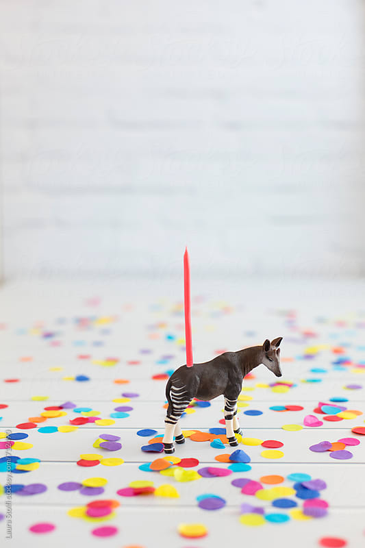 Okapi toy decorated with birthday candle standing amongst colorful confetti by Laura Stolfi for Stocksy United