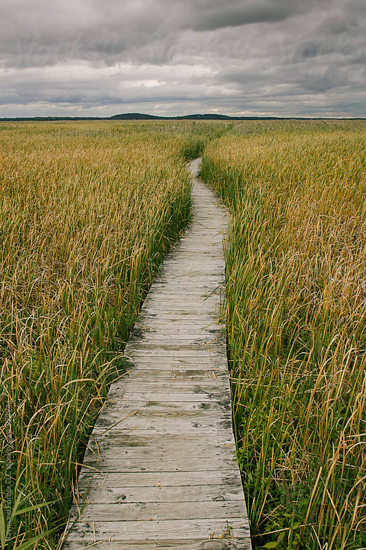 Boardwalk in Autumn by Raymond Forbes LLC for Stocksy United