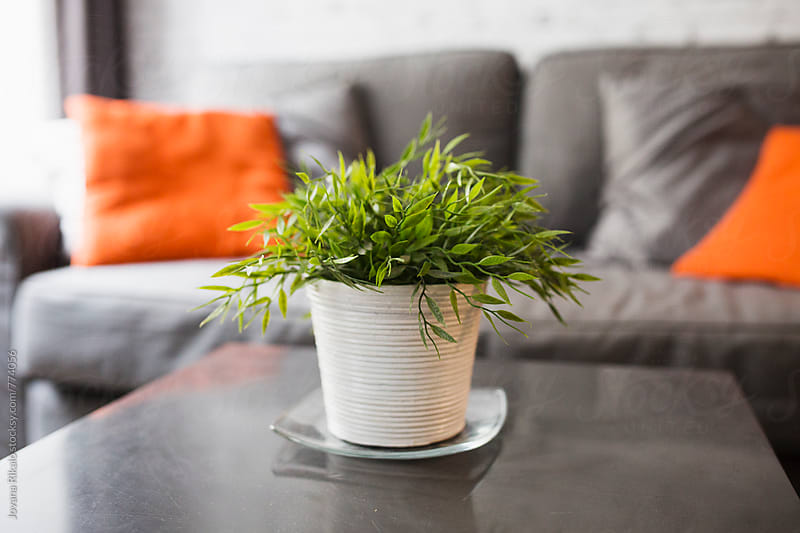 Flowerpot on a living room table by Jovana Rikalo for Stocksy United