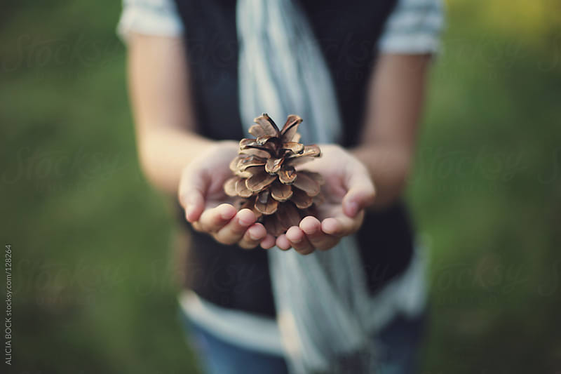 Holding a Pine Cone by ALICIA BOCK for Stocksy United