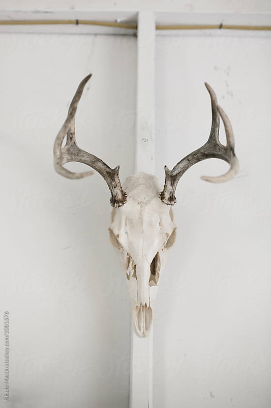 deer skull hanging on white wall in studio by Nicole Mason for Stocksy United