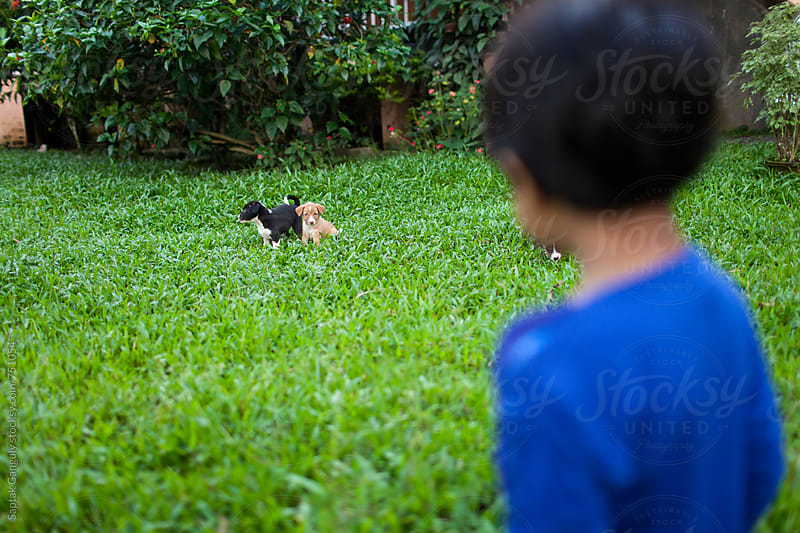 Child playing with puppies in the lawn by Saptak Ganguly for Stocksy United