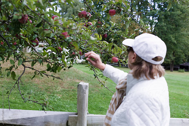 A woman picks an apple from a tree. by Holly Clark for Stocksy United