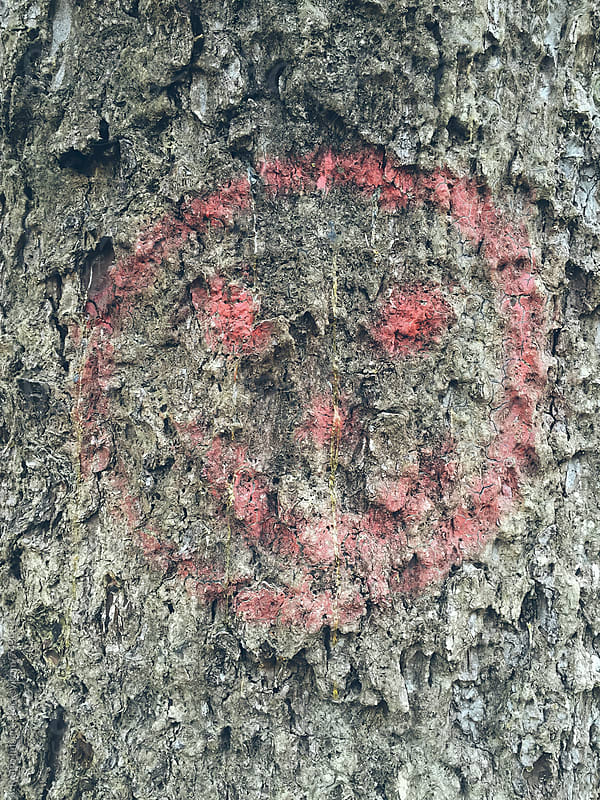 Smiley face spray painted on tree by Paul Edmondson for Stocksy United
