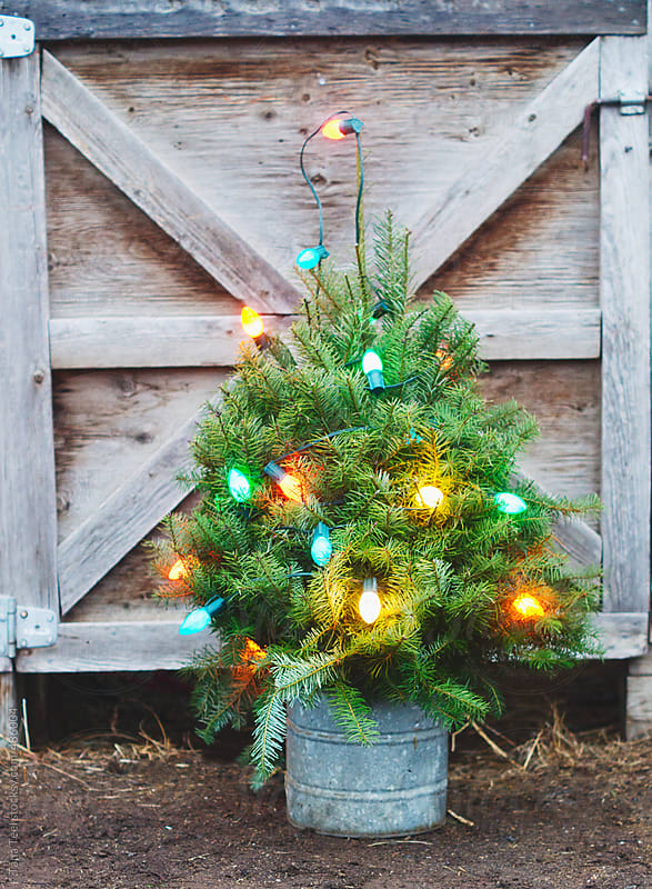 Lighted miniature Christmas tree by barn door by Tana Teel for Stocksy United