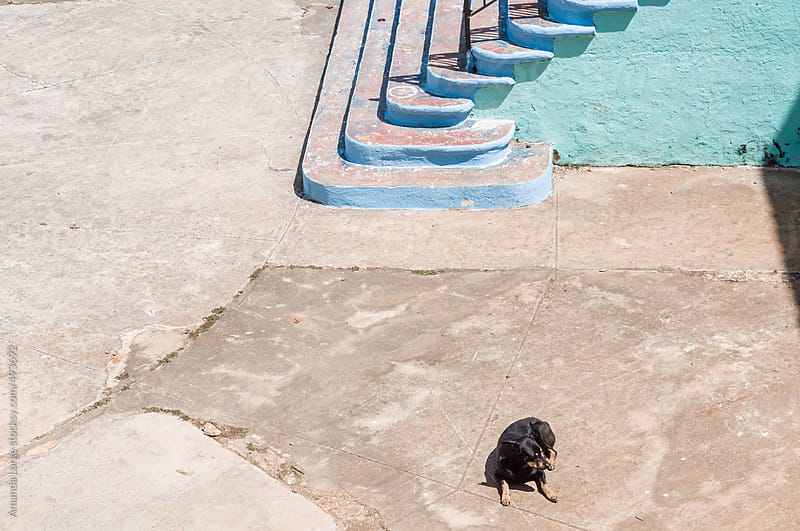 Chihuahua sitting by concrete stairs in a plaza. by Amanda Large for Stocksy United