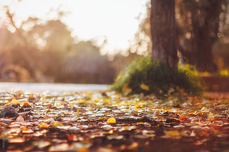 Ground Covered with Leaves in Autumn by Helen Sotiriadis for Stocksy United