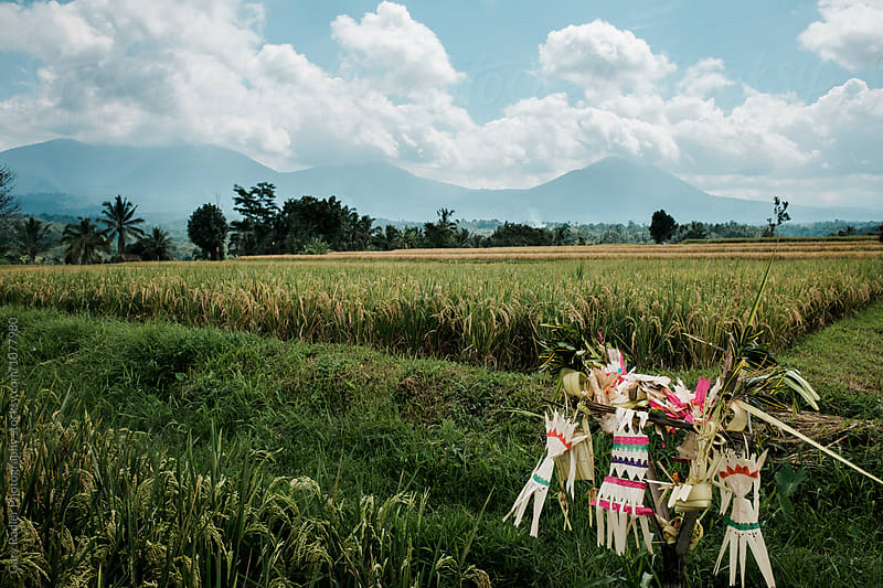 Hindu Objects in Bali Rice Field by Gary Radler Photography for Stocksy United