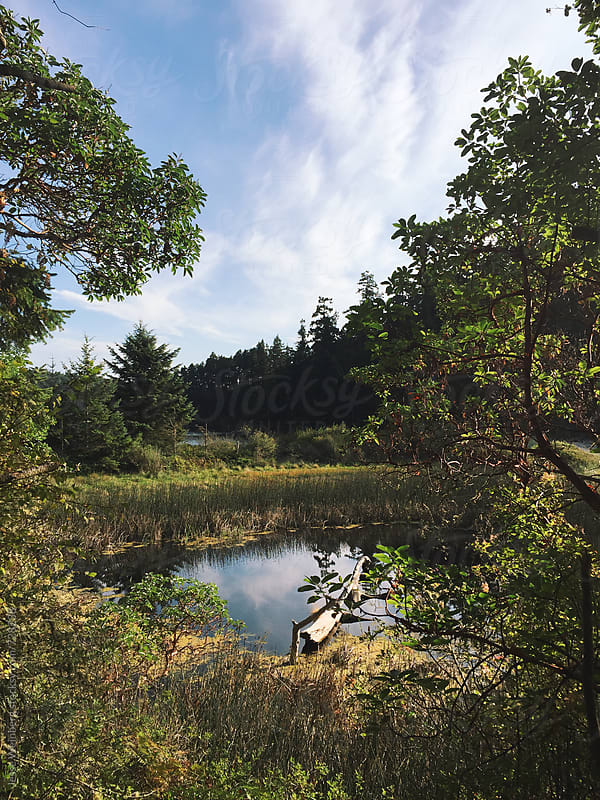 Pond by Jesse Weinberg for Stocksy United