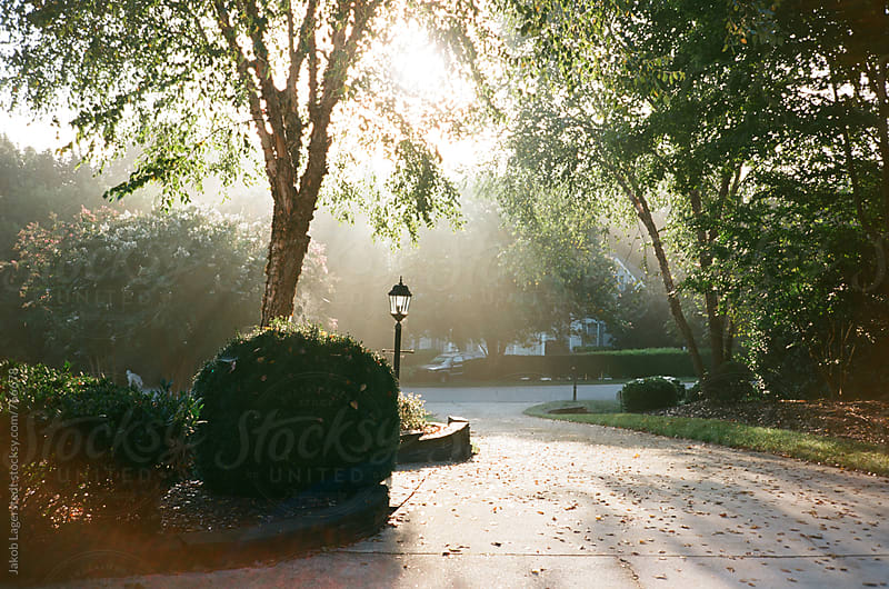 Driveway with sun shining through in the morning by Jakob for Stocksy United