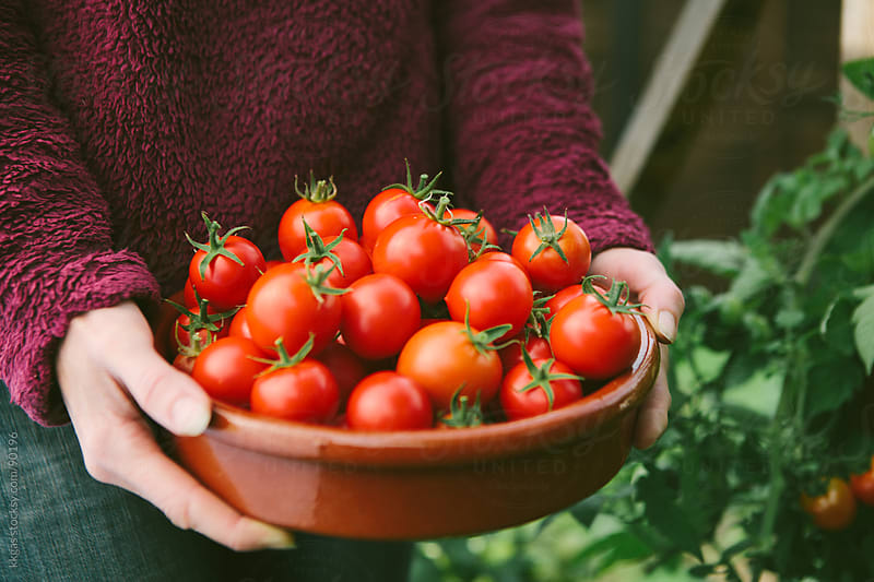 Gardener holding a bowl ful of freshly picked homegrown tomatoes by kkgas for Stocksy United