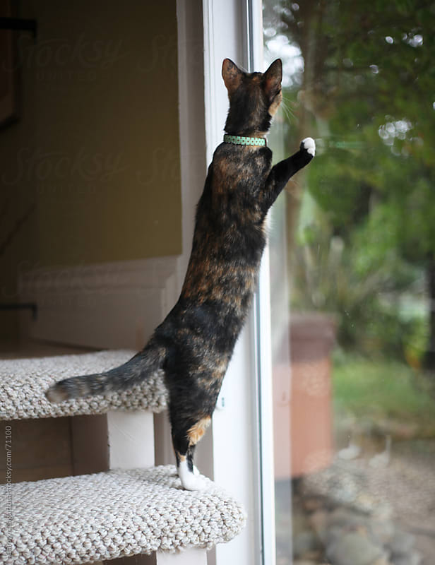 Indoor cat looking out the window at a squirrel by Carolyn Lagattuta for Stocksy United