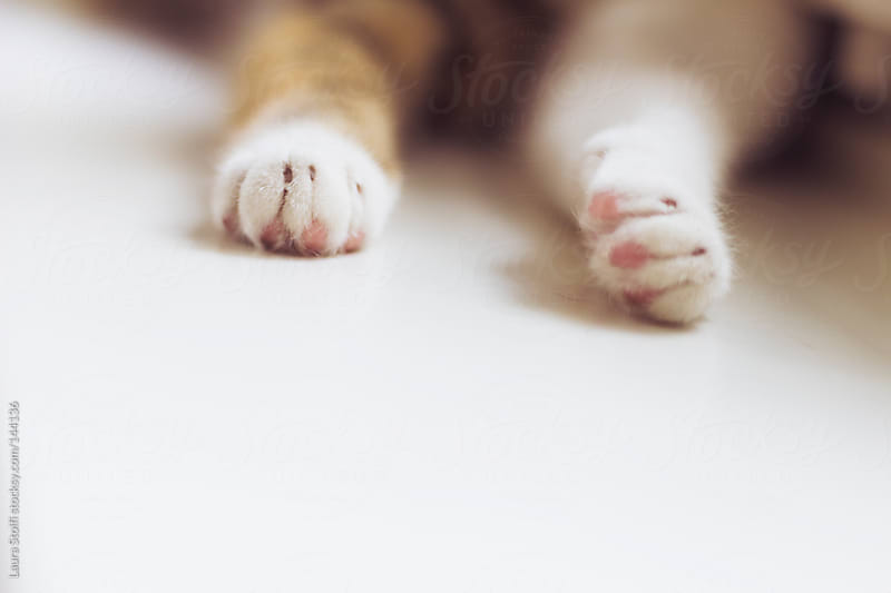 Close-up of tabby cat paws by Laura Stolfi for Stocksy United